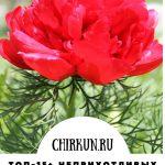 Топ-15+  неприхотливых цветов, которые радуют все лето