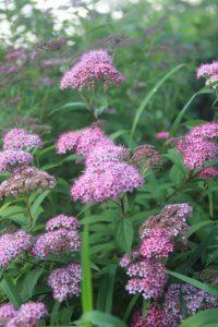 Топ-15+ неприхотливых цветов, которые радуют все лето/Chirkun.ru